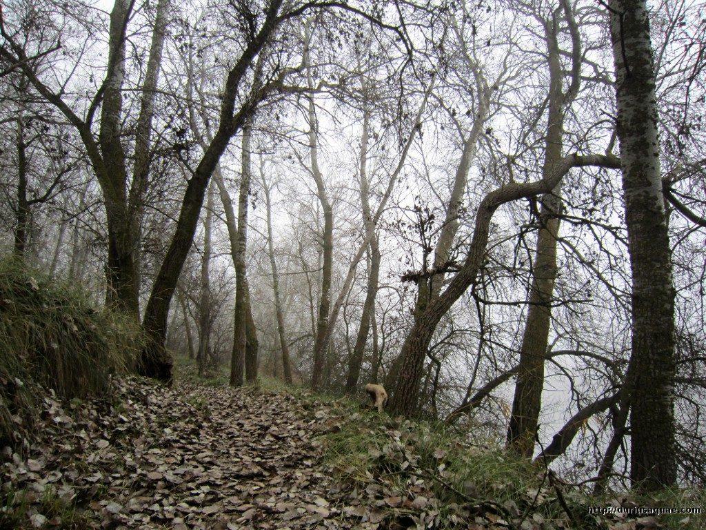 Durius Aquae; Senda del Duero, Tordesillas
