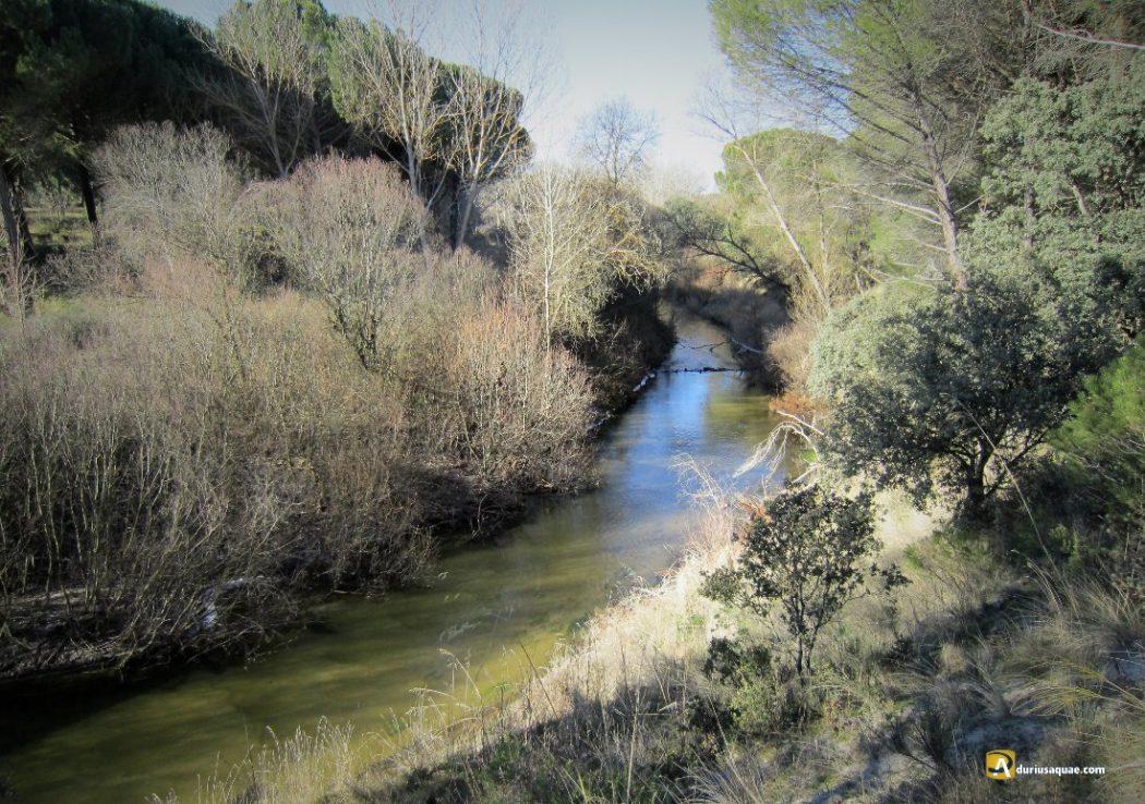 Durius Aquae: El Cega cerca del Duero