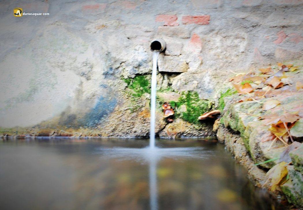 Durius Aquae: Fuente del Rector