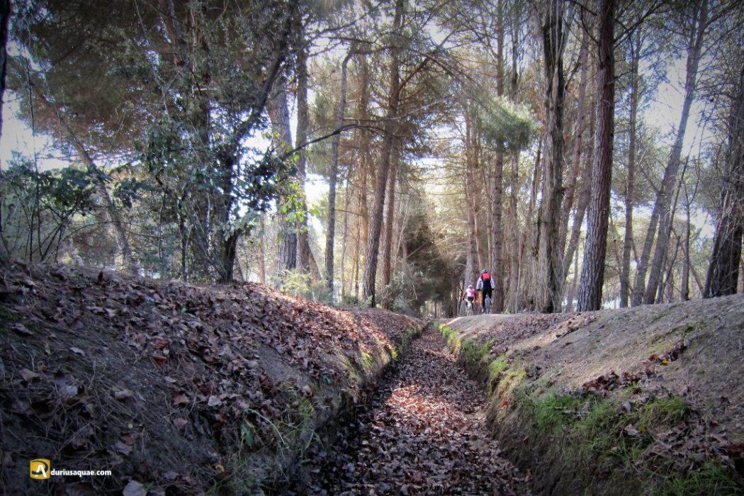 Durius Aquae: Acequia de Laguna, en invierno seca.