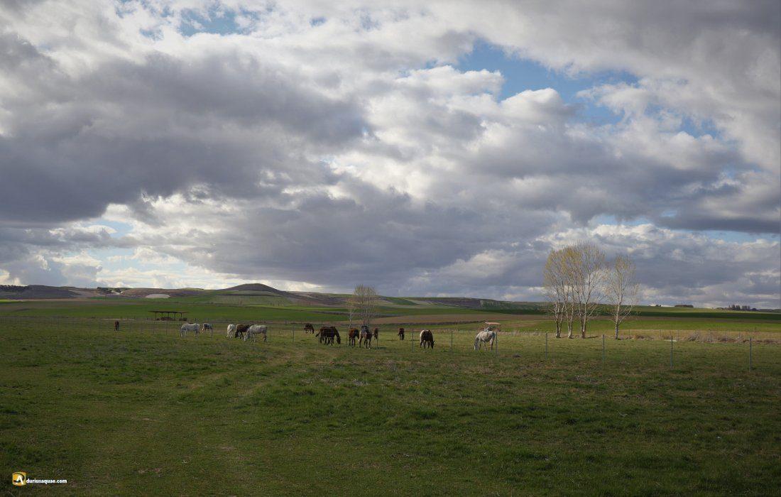 Durius Aquae, el valle medio del Hornija
