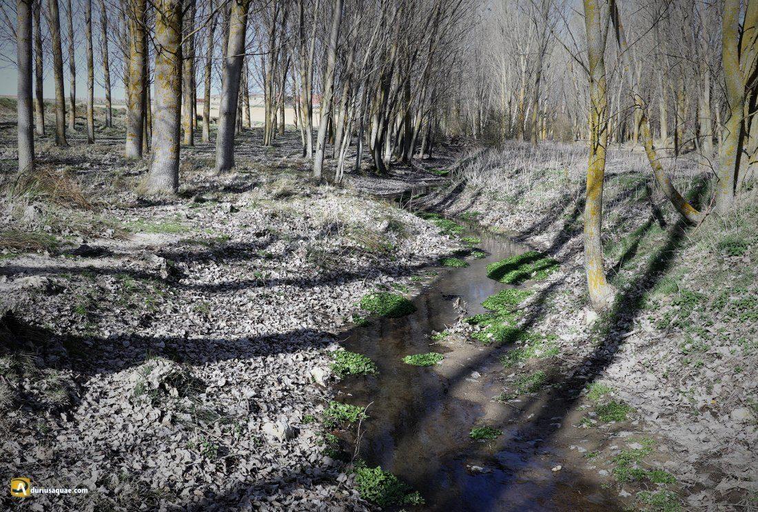 La Mudarra, los grises del incipiente arroyo van dejando paso el verde