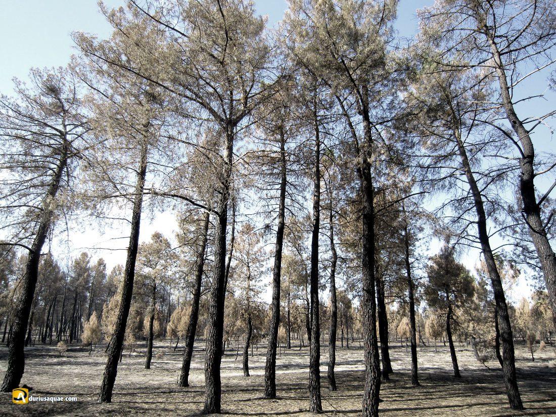 Durius Aquae: Restos del incendio de Navalilla