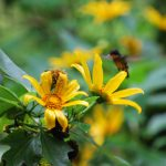 Colibrí en las montañas y selvas de Costa Rica