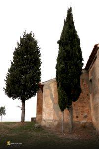 Familia de cipreses cercanías de Añe