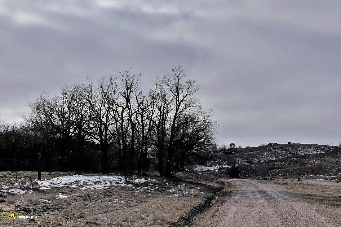 Durius Aquae: Cañada Real hacia Garray