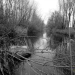 La maleza y troncos secos se acumulan y una balsa abandonada en el Cea
