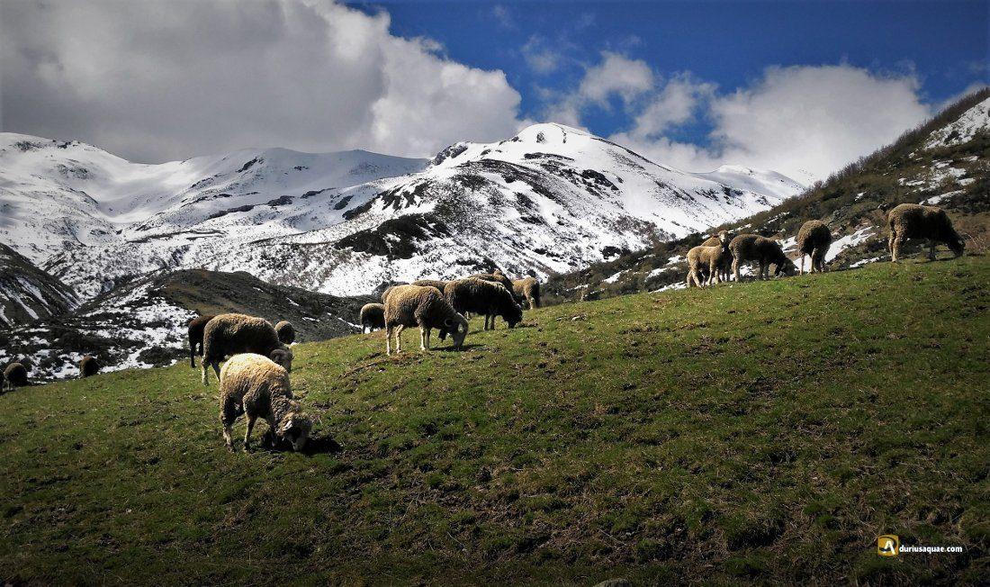 Durius Aquae: Valle del Curueño
