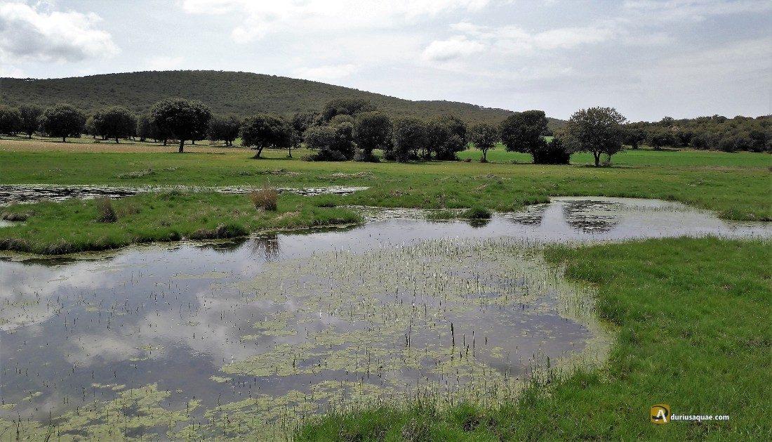 Durius Aquae: San Martín de Cabezas. Laguna donde nace el Zapardiel