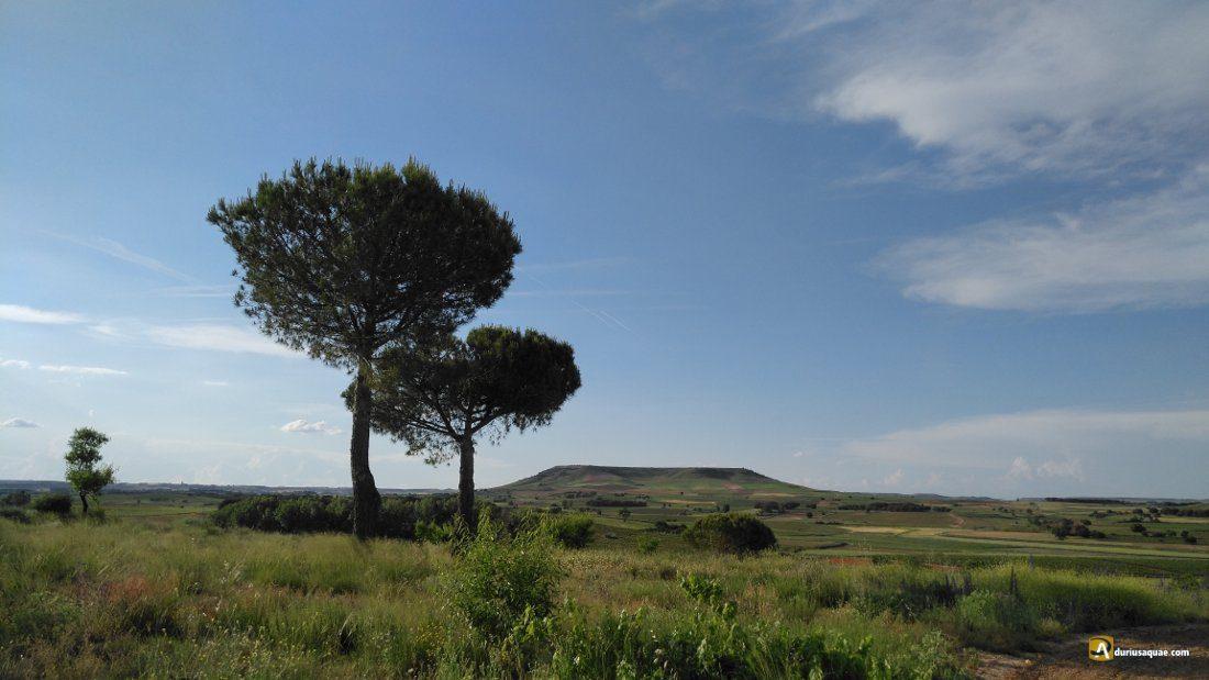 Cerro Manvirgo desde Roa de Duero