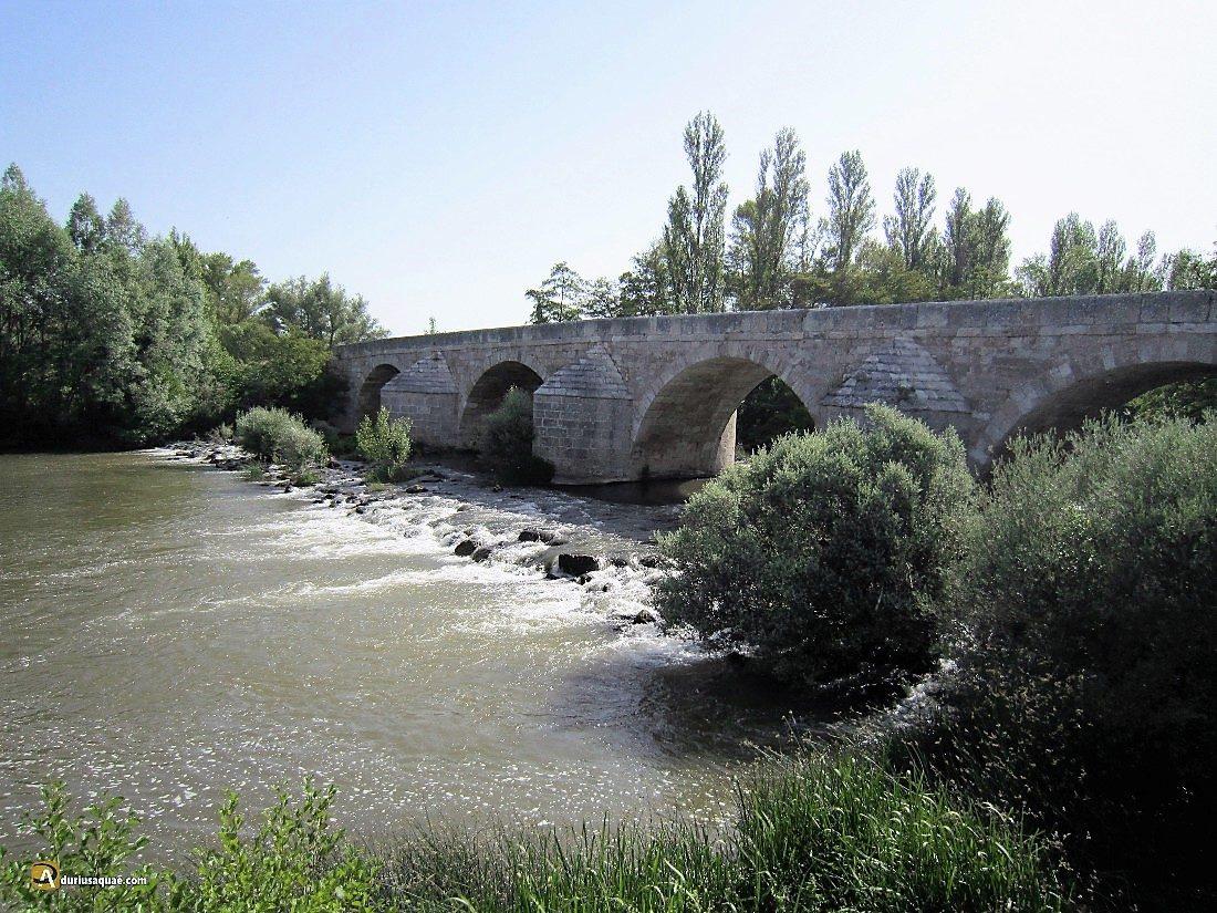 Durius Aquae: Arlanza camino del Pisuerga