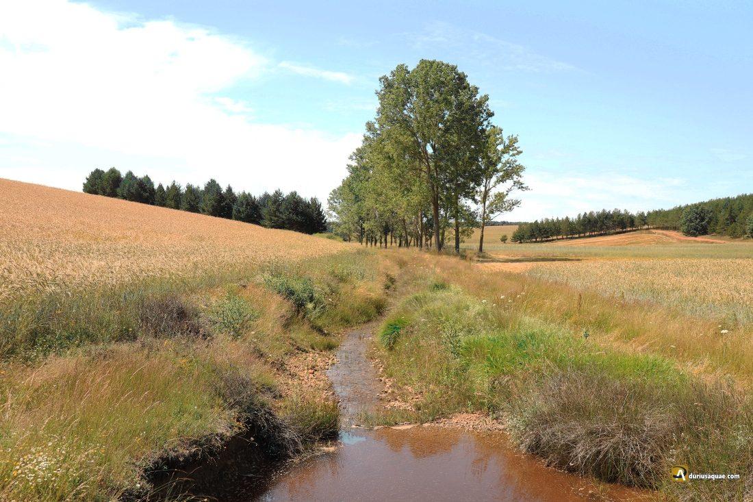 El arroyo de La Cueza, ya formado, se dirige a Tierra de Campos