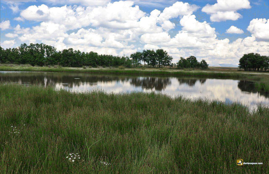 Durius Aquae: Laguna Mayor, en la cabecera del arroyo La Cueza