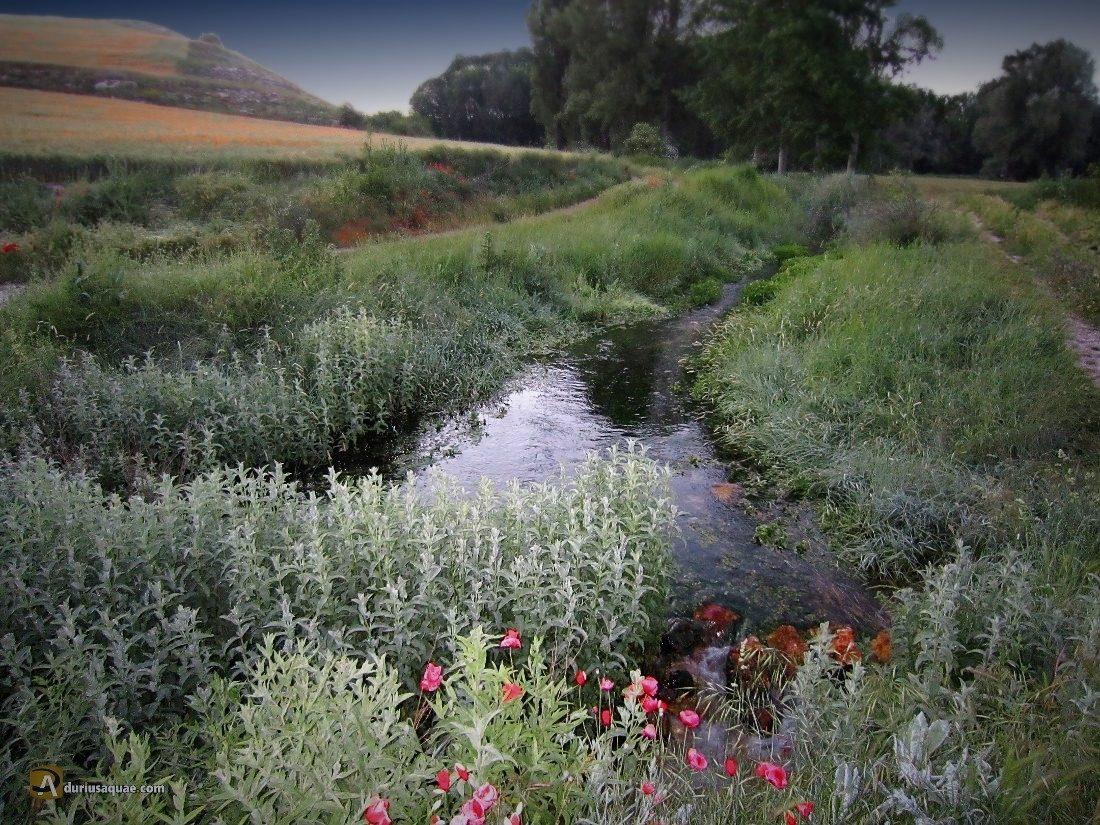 Durius Aquae: El río Franco en las cercanías de Villafruela