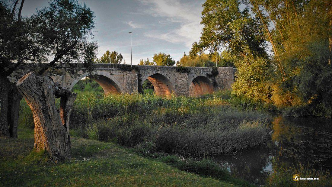 Durius Aquae: Tariego de Cerrato puente sobre el Pisuerga