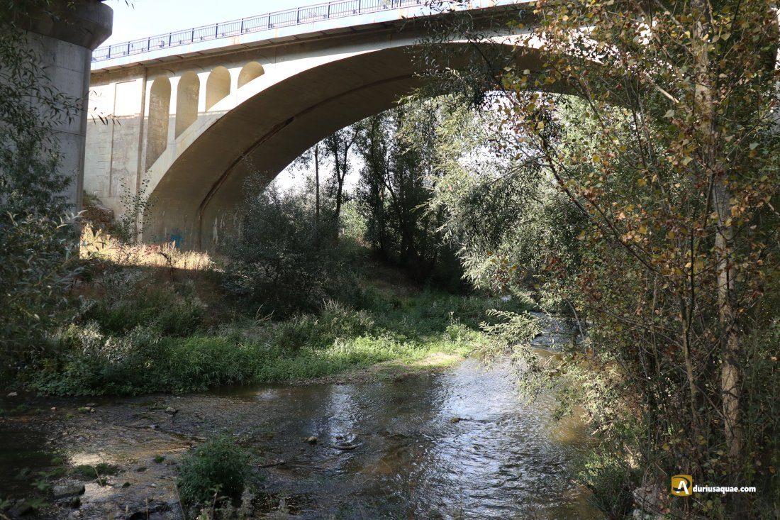 Durius Aquae: El Adaja bajo el viaducto de la A-6