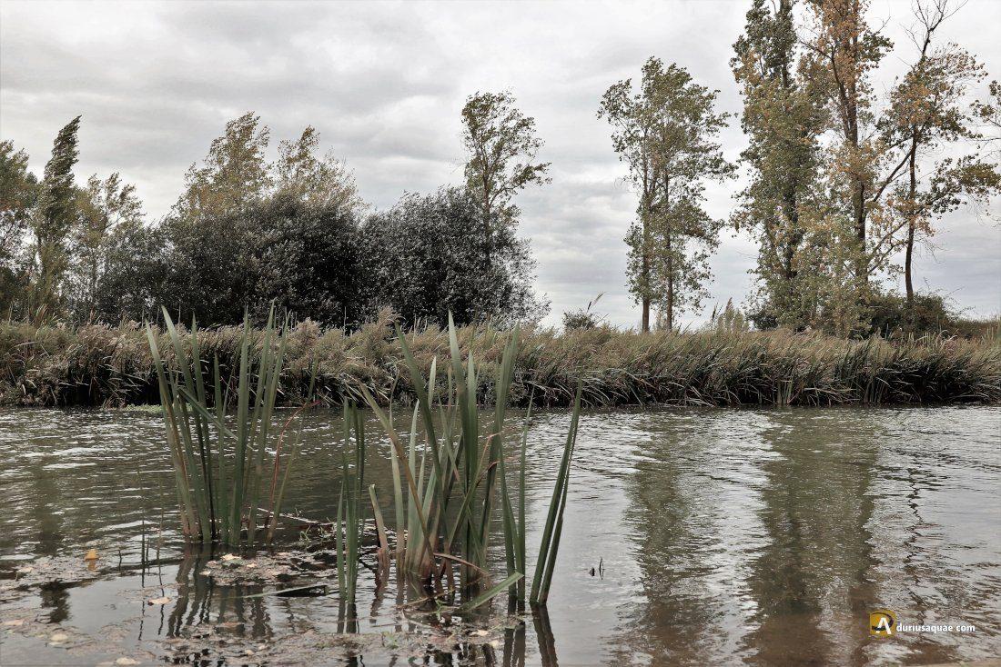 Durius Aque: Canal de Castilla en Melgar