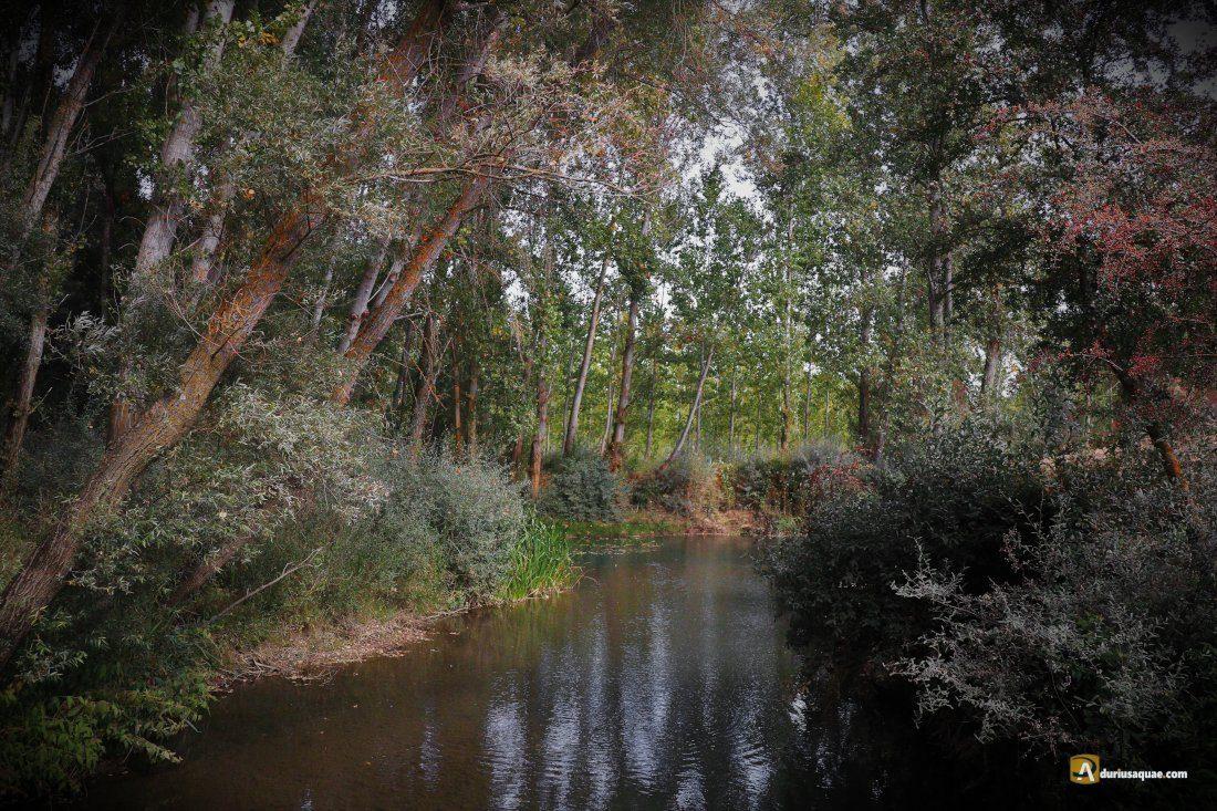 Durius Aquae: Valdavia