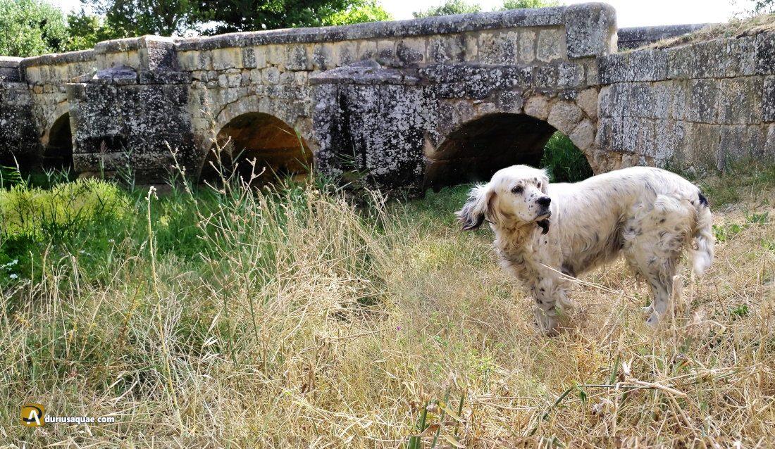 Durius Aquae: Pinilla-Trasmonte, Puente Bajero.