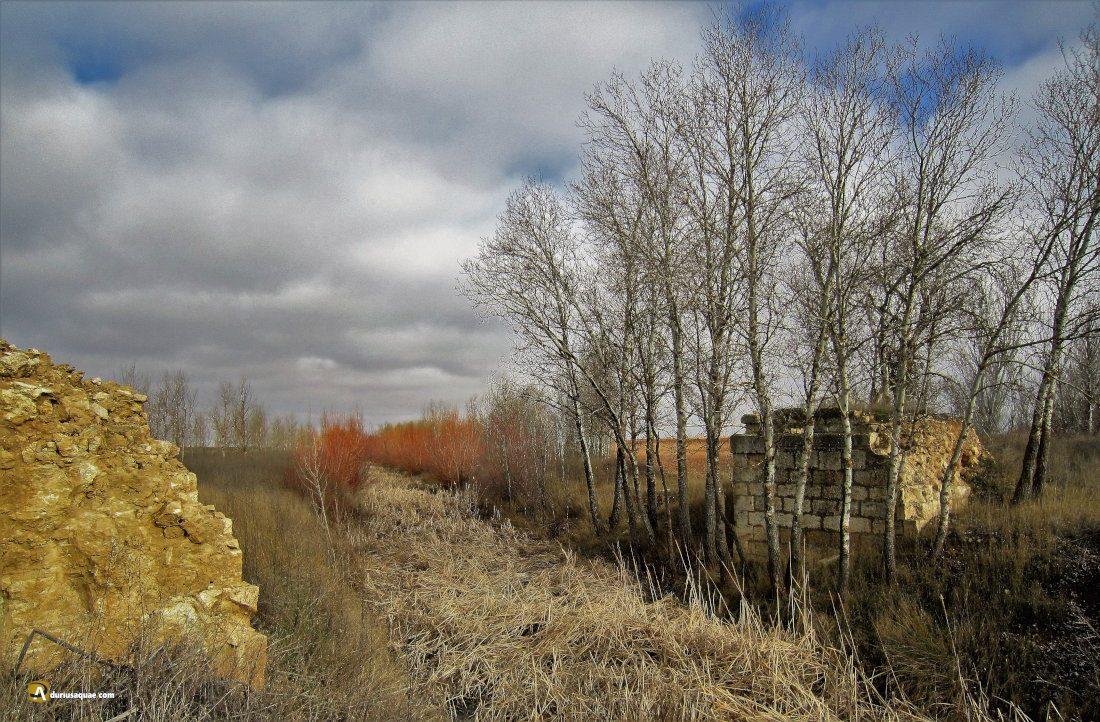 Durius Aquae: Arroyo Ahogaborricos, al fondo las mimbreras lucen de naranja