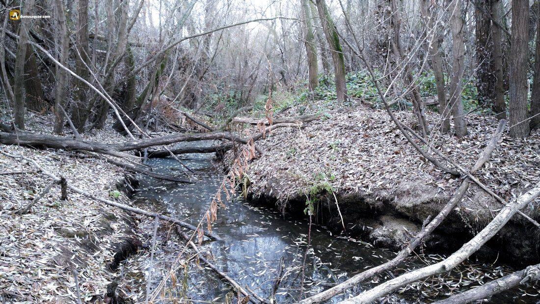 Durius Aquae: Últimos metros del Trabancos inundado por el Duero recrecido