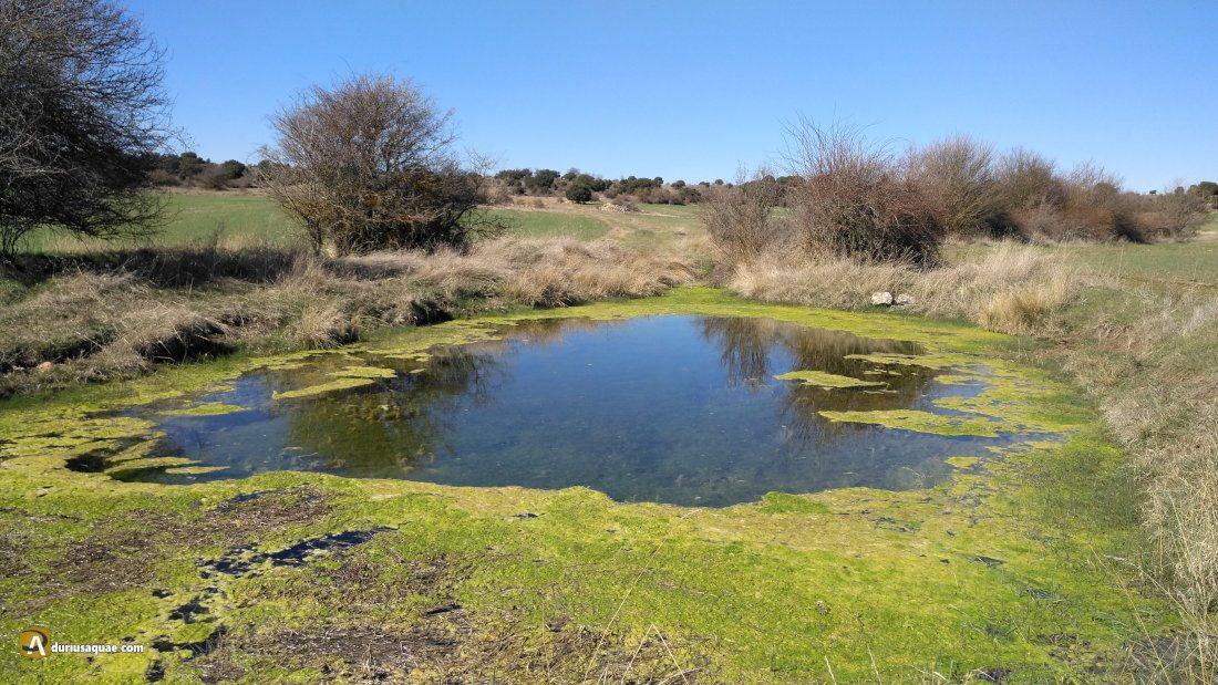 Durius: El río Bordecorex se nos muestra ahorrador en su nacimiento.