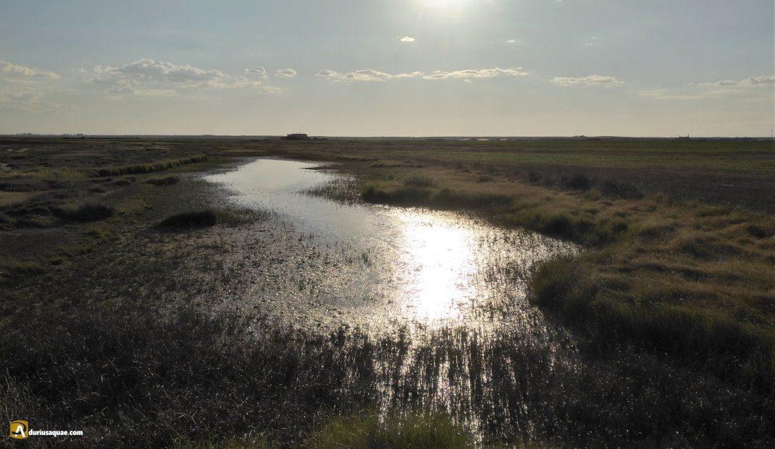 Durius Aquae: Lagunas de Villafáfila