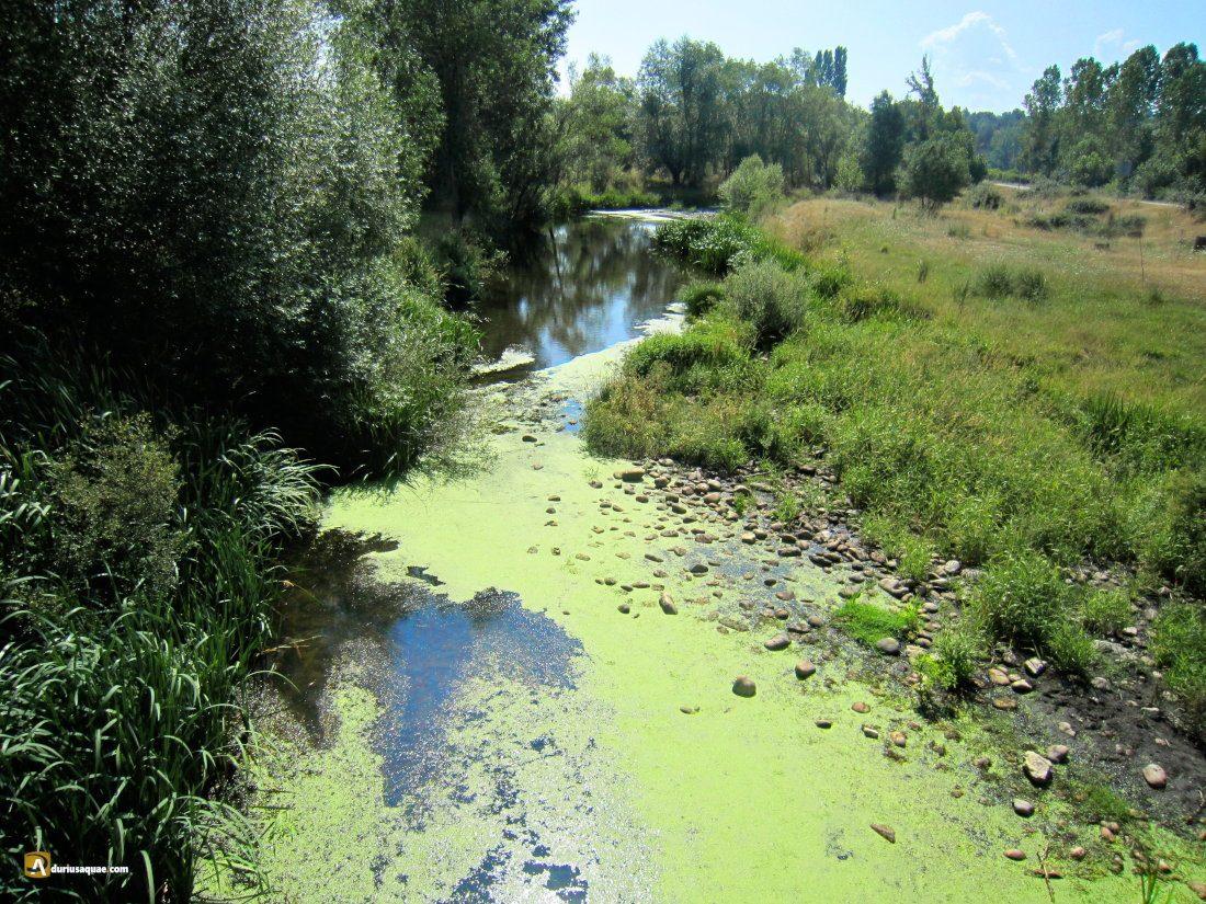 Durius Aquae: Cega en Pajares de Pedraza