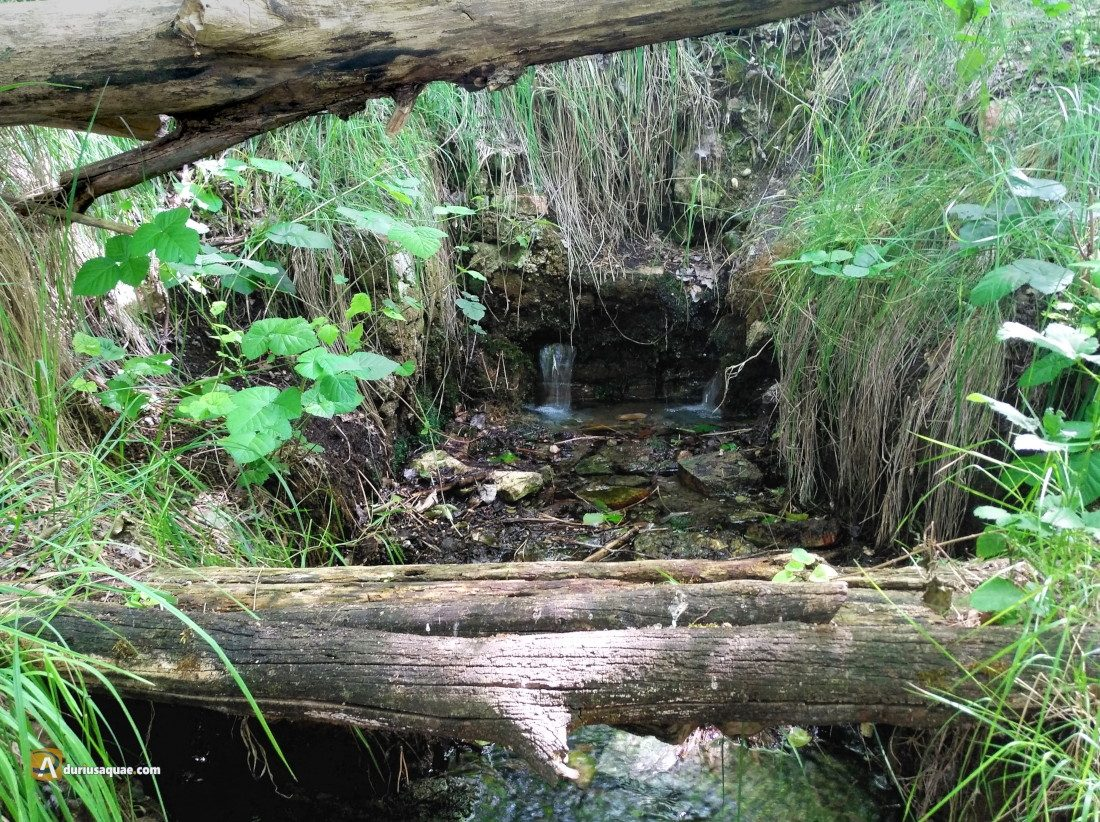 Durius Aquae: manantial junto al Duero