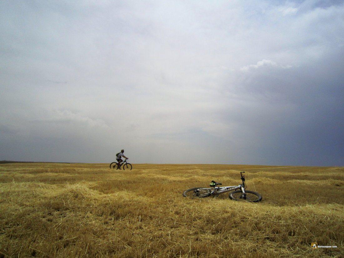 Durius Aquae, campos segados