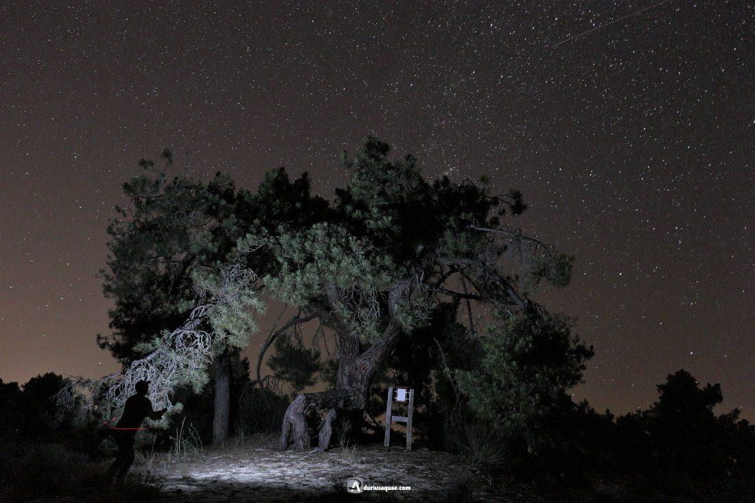Durius Aquae: Pino andante de noche
