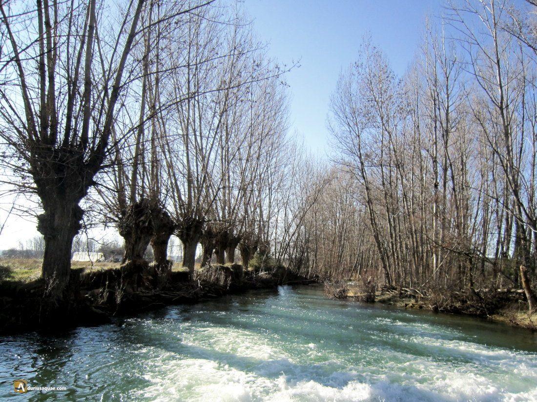 Durius Aquae: Valdenarros, río Abión y chopos trasmochados
