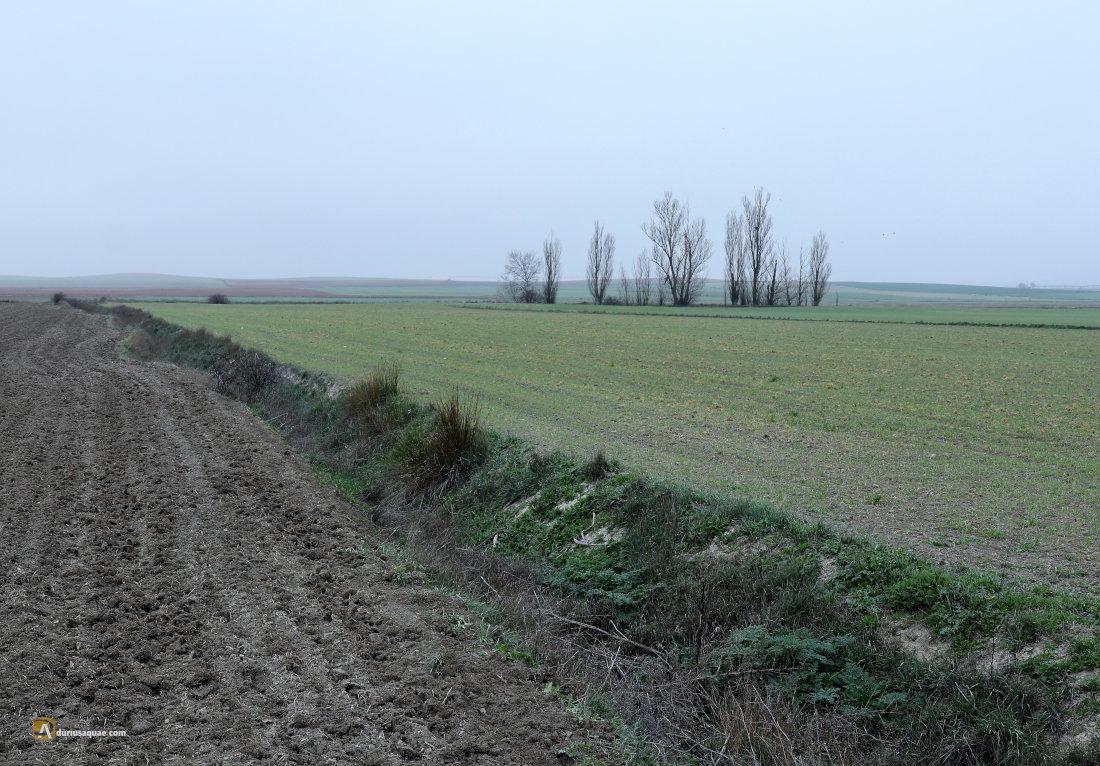 Durius Aqaue: El arroyo llega al Hornija. Un mal campo de batalla...