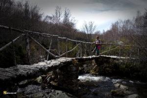 Puente de abedul sobre el arroyo Pingón