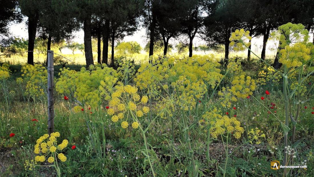 Durius Aqaue: Las vegas del Duero son un festival