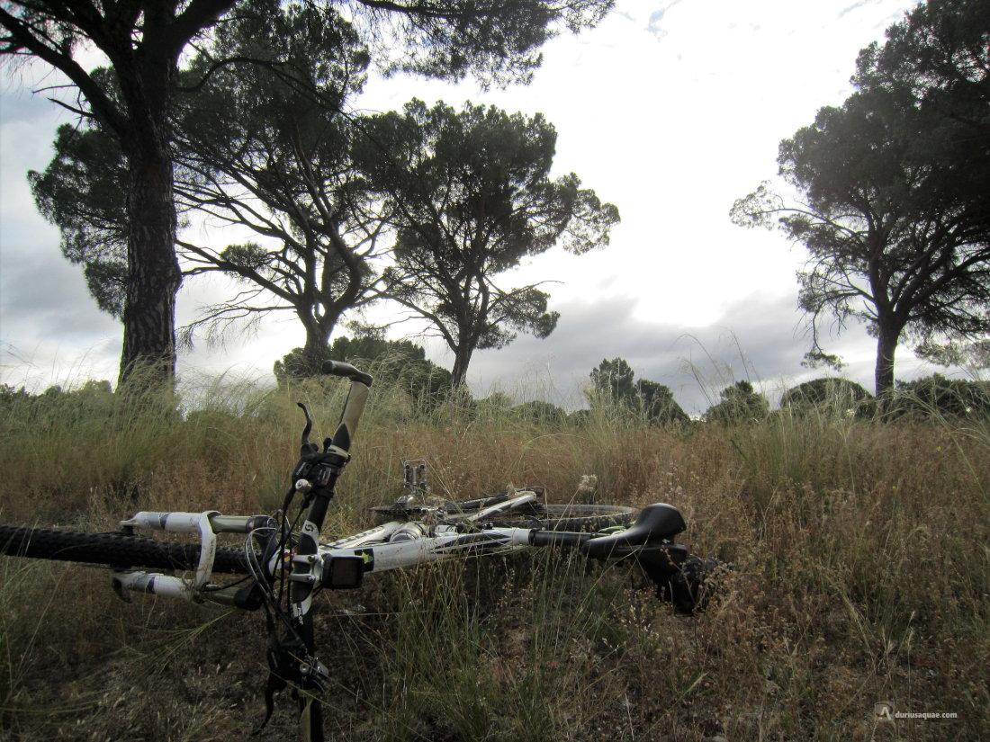 Valdestillas: Pinar del Tamarizo