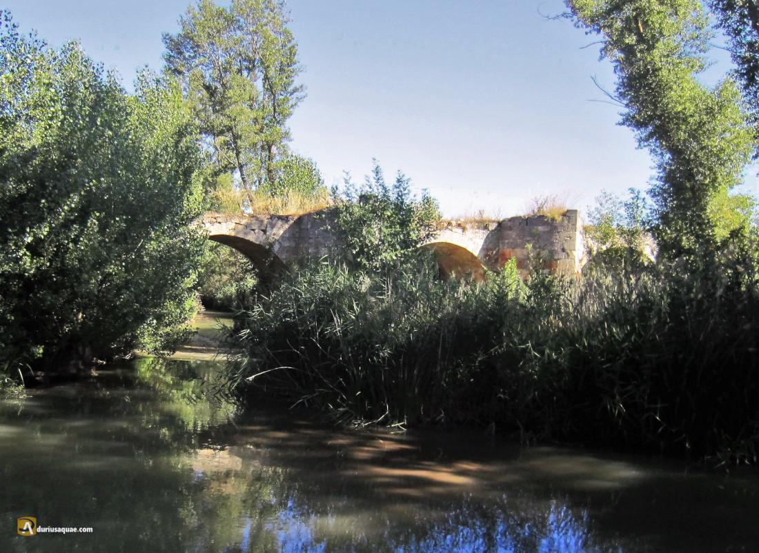 Durius Aquae: Roa, puente Viejo
