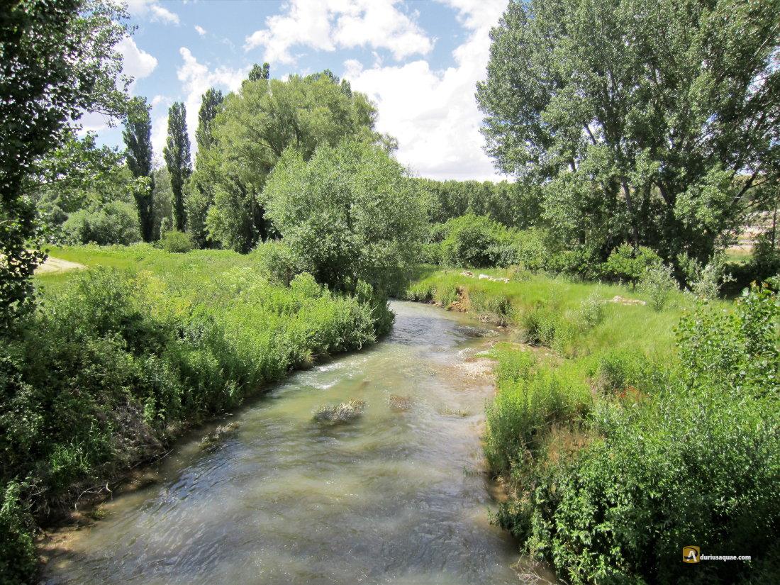 Durius Aqaue: El río Riaza