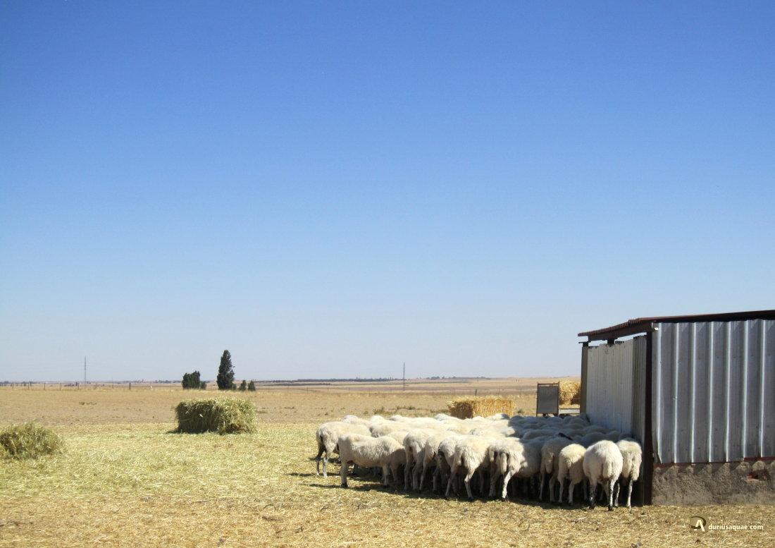 Redil en Cantaracillo, Salamanca