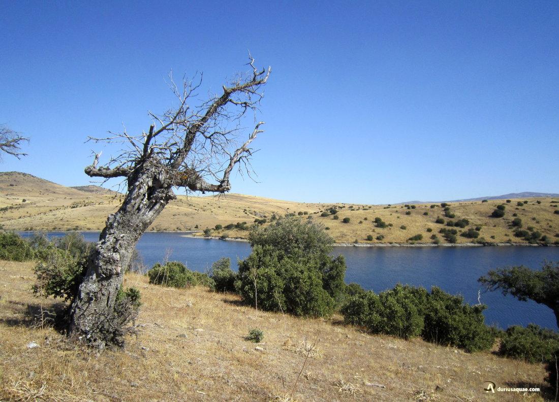 Durius Aquae: Río Almar, embalse del MIlagro