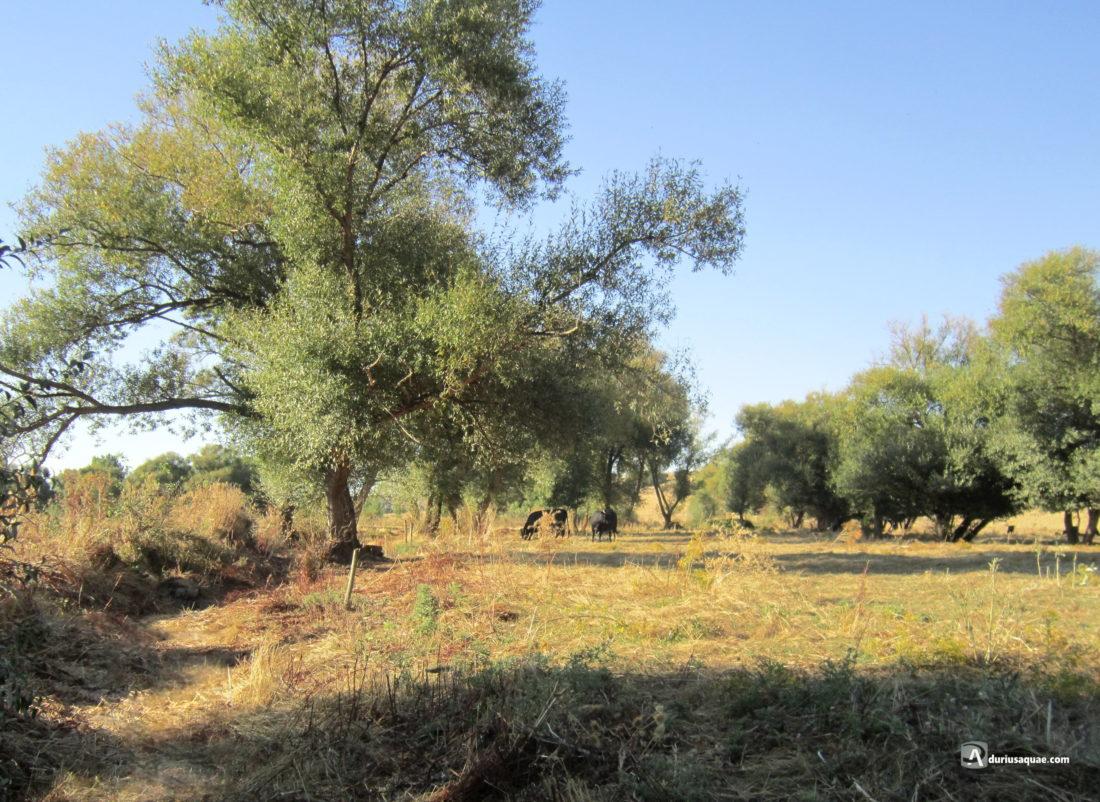 Cauce seco del río Almar