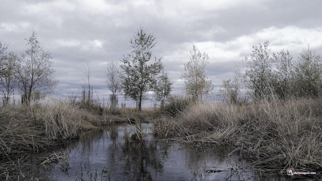Lagunas en La Pedraja de Portillo