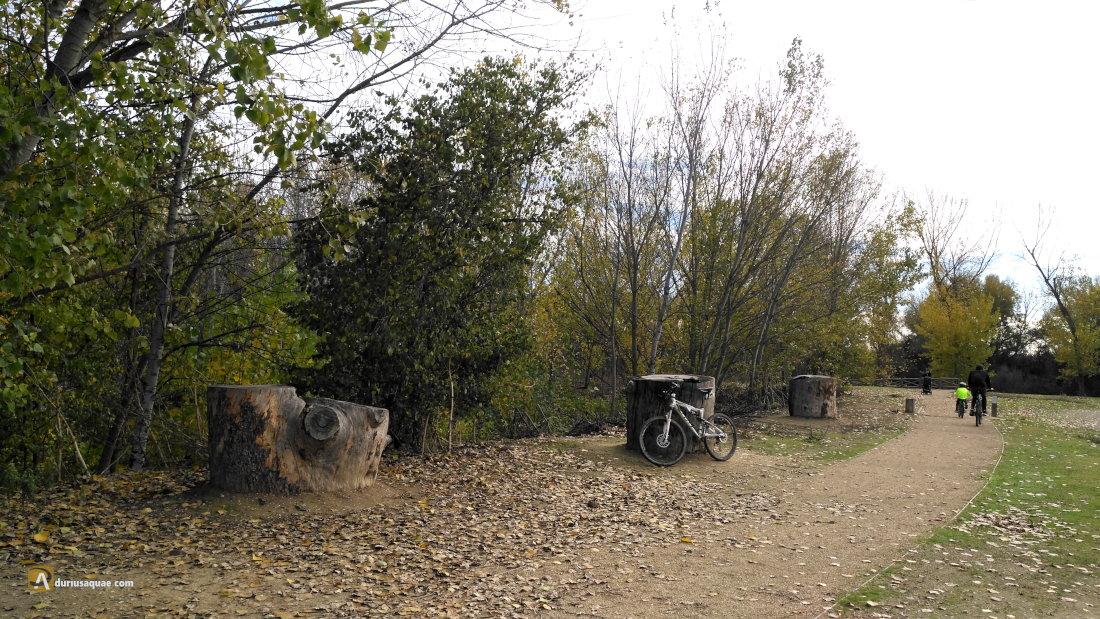 Los restos de aquel hermoso pino de alepo