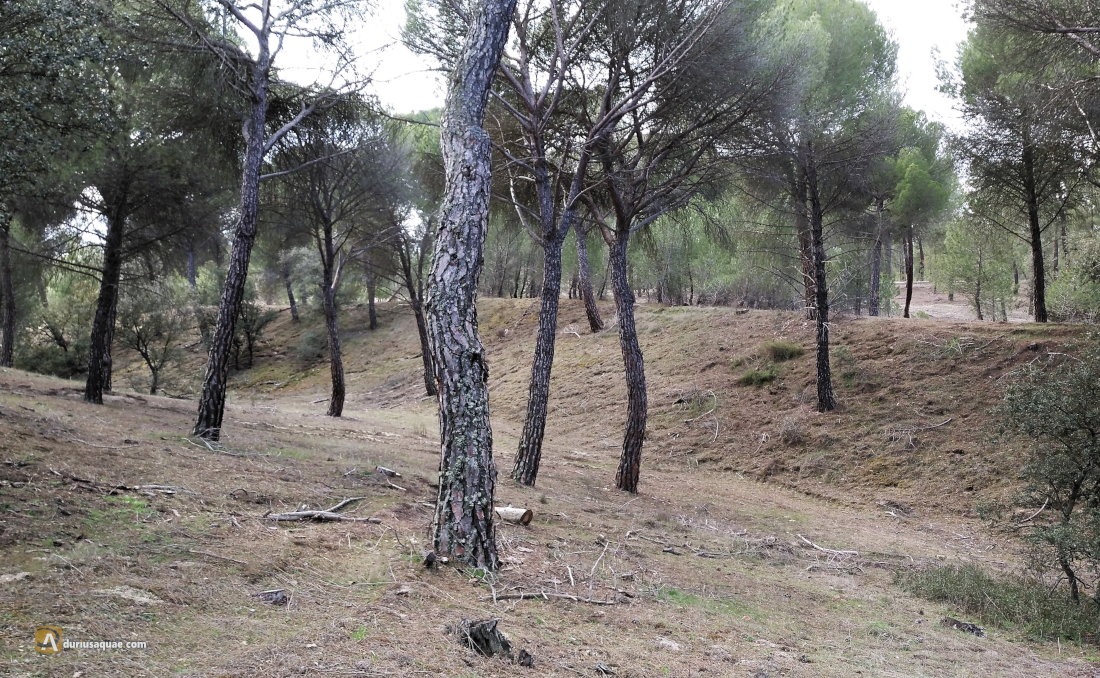 Canal de Isabel I, Medina del Campo