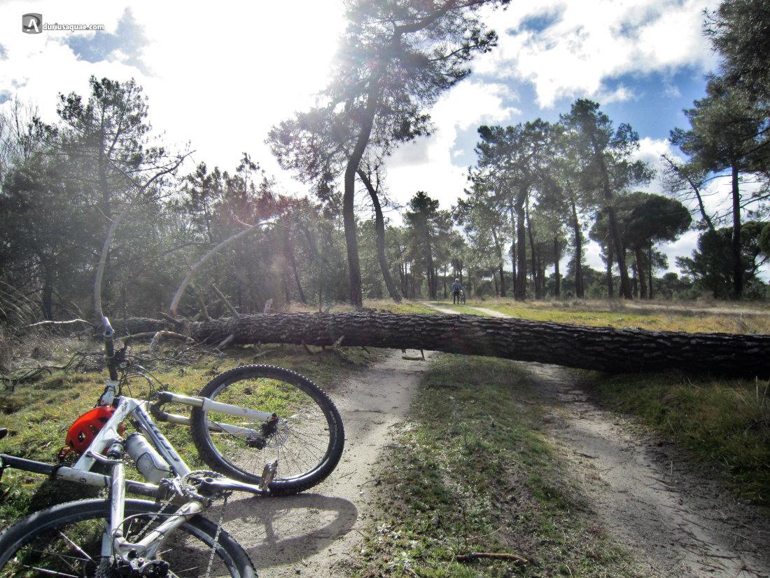 Árboles caídos por los temporales