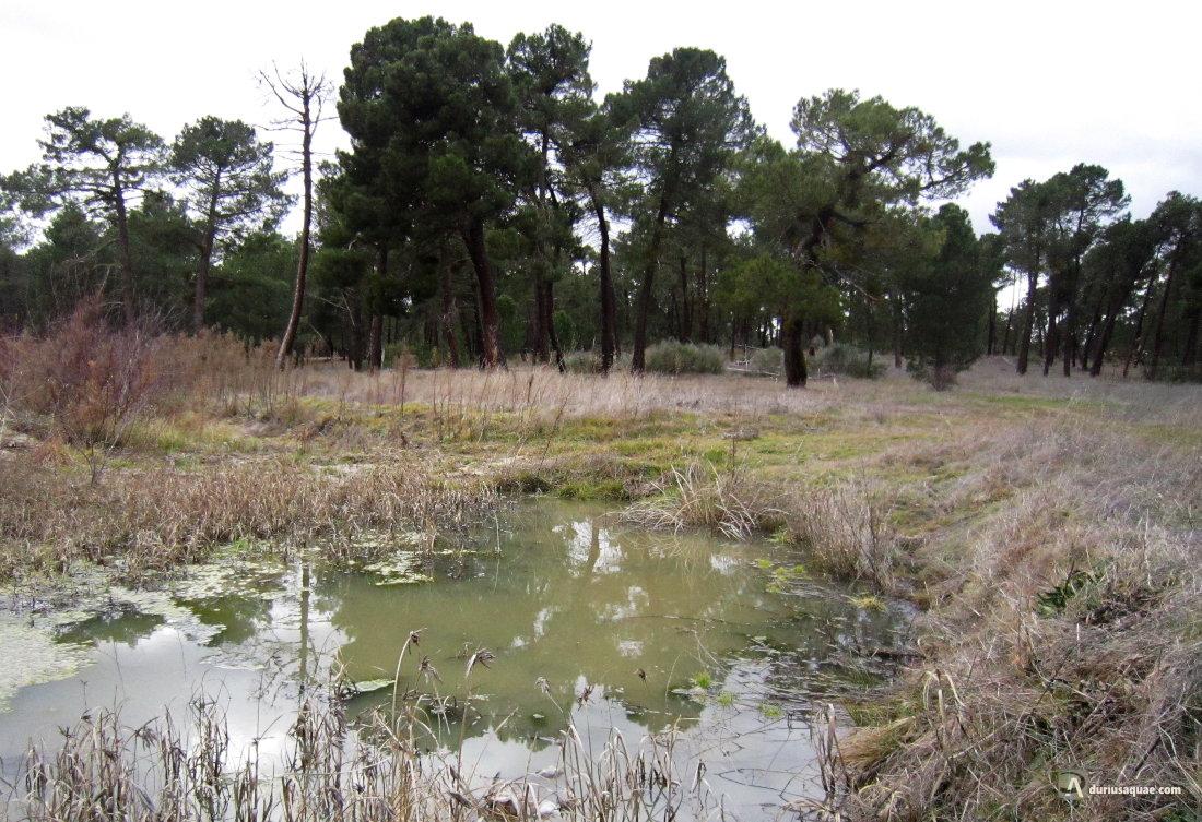 Junto a la Laguna de la Magdalena, San Martín y Mudrián