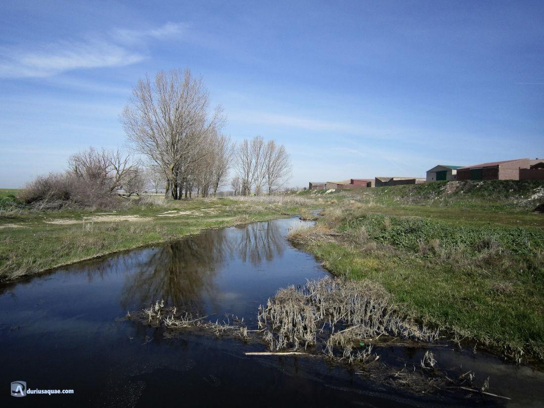 Río Zapardiel en la Moraña, Cisla