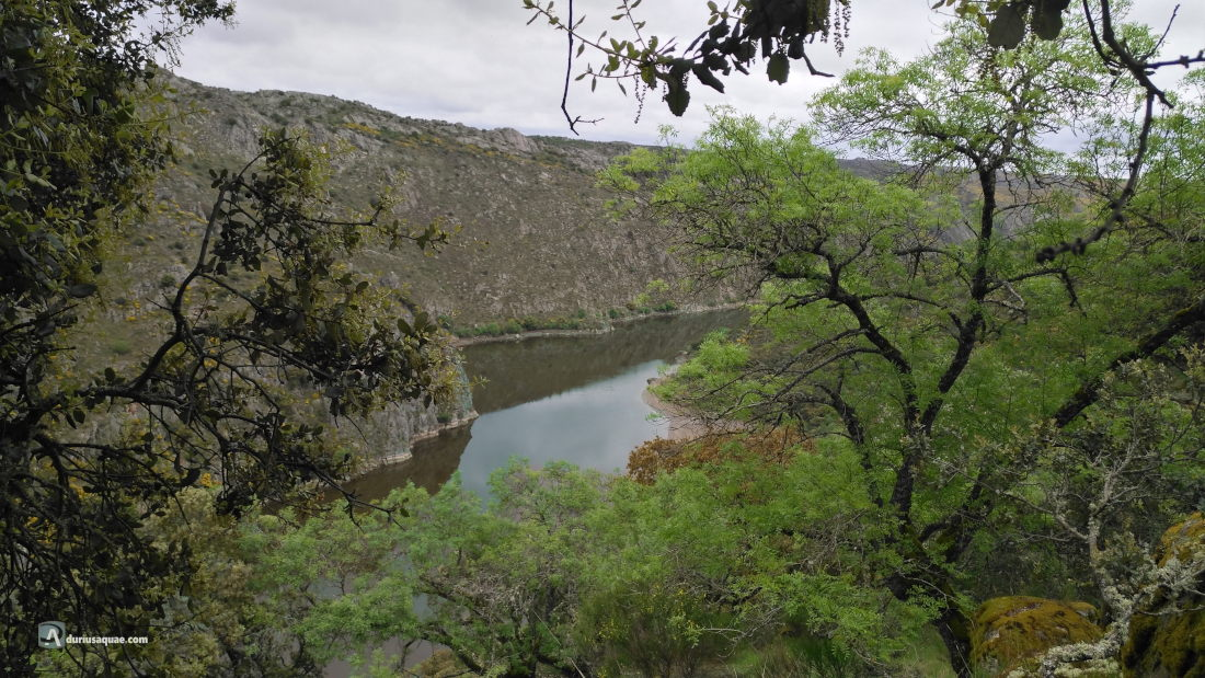 El Duero en Arcillo, Pereruela