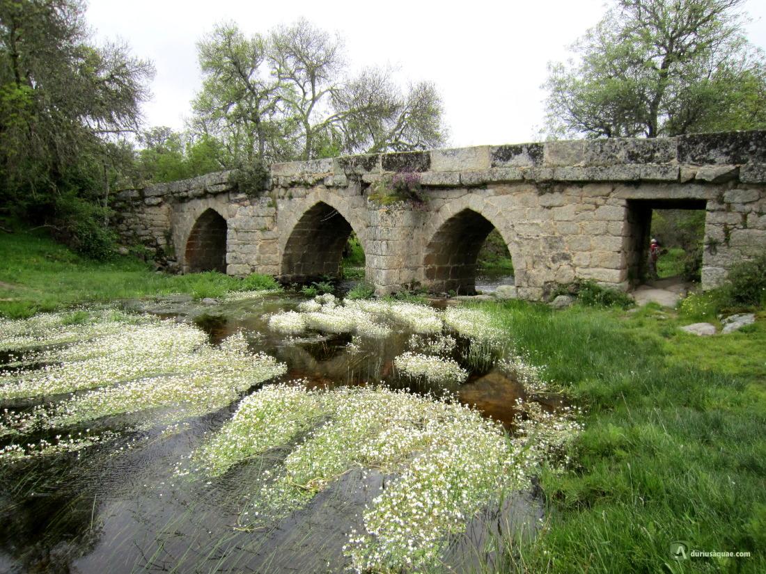 Puente de Albañeza, Sayago