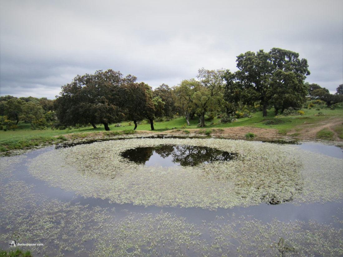 Fuente del Bacallón, dehesa de Albañeza